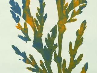 Plant Forms Silkscreen Print 2 by Seigen (Year 8)